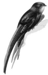Самой летающей птицей является черный стриж.  В воздухе он может...